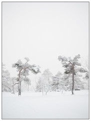 Winter trees (Georg Engh) Tags: landscapesshotinportraitformat