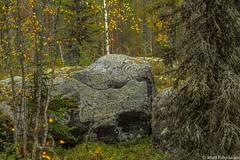 Autumn (pohjoma) Tags: autumn fall stone autumncolors lichen kivi kasvi syksy canonef24105mmf4lisusm jkl canoneos5dmarkiii