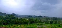 Bali : Jatiluwih . (Franc Le Blanc .) Tags: bali nature lumix panasonic ricefields sawah jatiluwih
