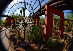 Star Nursery (MPnormaleye) Tags: arizona cactus urban sculpture distortion southwest lensbaby cacti 35mm garden botanical rocks desert nursery fisheye utata shelter succulents