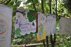 Save pollinators and predators (mansi-shah) Tags: rainforest farming coorg madikeri forestecology mansishah rainforestretreat jenniferpierce ceptsummerschool