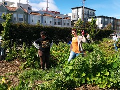 The Bee Farm, 3299 San Bruno Ave, SF CA 94134 (Jay Rosenberg) Tags: sanfrancisco art ecology design hayesvalley permaculture urbanpermaculture hayesvalleysf permaculturesf hayesvalleyartworks hayesvallleyartworks 456laguna
