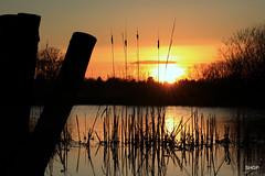 Hinchingbrooke Park, Brampton, Huntingdon (SHGP) Tags: park sunset sky sun lake color colour tree bird animal landscape outdoor wildlife vegetation huntingdon hinchingbrooke