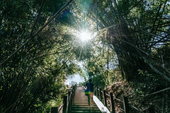 #MoonWorld (David C W Wang) Tags: light day outdoor taiwan bamboo kaohsiung 台灣 高雄 風景 植物 光 竹林 月世界 戶外 moonworld 白天 田寮區 sel2470z sonya7ii