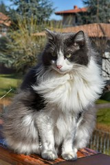 My furry boy in the sun (silviamancini) Tags: cats cat beautifulcats