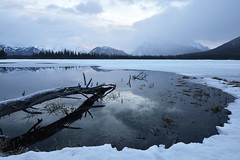 In That Quite Morning (mimai2007) Tags: travel lake canada mountains misty sunrise reflections branch cloudy alberta canadianrockies vermilionlake