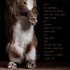 A Typical Pet Photoshoot (Jeric Santiago) Tags: pet rabbit bunny animal conejo lapin hase kaninchen petphotography うさぎ 兎 winterrabbit