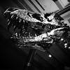 Tristan-Otto - what an unfortunate name... (jens.wiesner) Tags: berlin archaeology tristan skeleton fossil dino dinosaur otto trex tyrannosaurus tyrannosaurusrex archaeologicalmuseum dinosaurier tyrannosaur berlincity naturkundemuseum berlinlove uploaded:by=flickstagram berlinstagram instagram:venuename=museumfc3bcrnaturkundeberlin instagram:venue=215783159 instagram:photo=117103305226511783212015061 fossiladdict