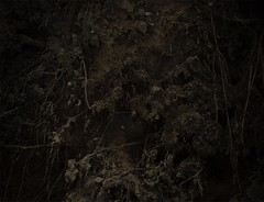 (jonsebastianw) Tags: tree nature dark underground photo mud earth roots soil fallen root