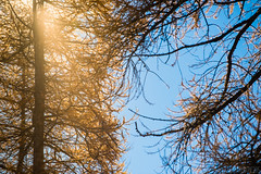 Formaggino Autunnale #24 ( YariGhidone ) Tags: life autumn mountain nature way stars landscape colours outdoor via val milky colori paesaggi montagna refuge conca stelle bivvy bivacco formaggino prali lattea germanasca cialancia