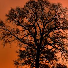 Veins of Life - Lebensadern II (W_von_S) Tags: life light shadow orange tree nature silhouette wow licht ast branch outdoor branches sony natur veins ste schatten baum leben werner ebersberg a700 adern veinsoflife wvons