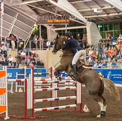 160409_2016_SydneyCDI_Jumping_4404.jpg (FranzVenhaus) Tags: horses test sydney australia nsw judge newsouthwales aus equestrian riders dressage siec