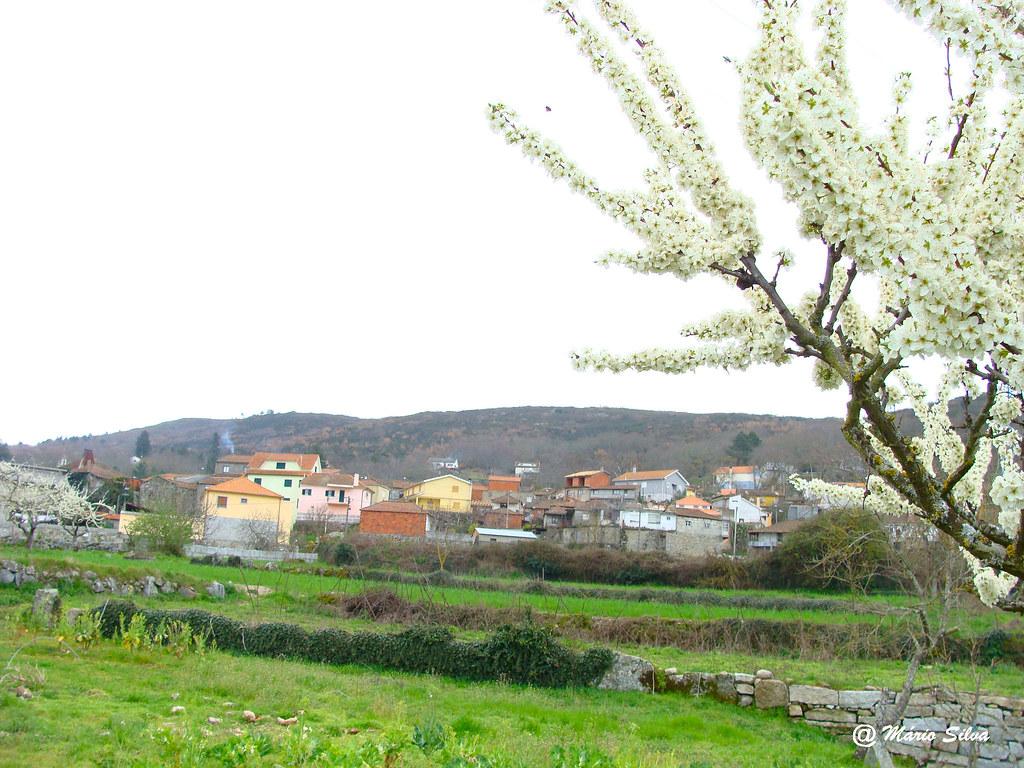Águas Frias (Chaves) - ...A Aldeia e a árvore em flor ...
