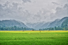 Lembah Harau (tehhanlin) Tags: indonesia landscape sony ngc ibis bukittinggi padang novotel pagaruyung minangkabau jamgadang lembahharau westsumatera batusangkar tanahdatar ngaraisianok padangpanjang sal70400g pacujawi padangpariaman variotessar16354za a7r2 a7rm2