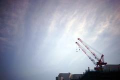 DSC02270c2 (haru__q) Tags: crane sony a7 summar leitz