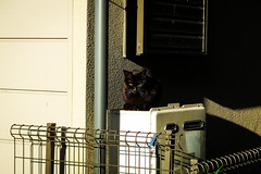 Today's Cat@2016-04-21 (masatsu) Tags: cat pentax catspotting mx1 thebiggestgroupwithonlycats