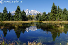 Schwabacher Landing and the Tetons (moelynphotos) Tags: autumn mountains reflections landscape snowcapped snakeriver wyoming grandtetons grandtetonnationalpark evergreentrees landscapeformat moelynphotos