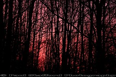 Sunset through the trees (STAFF.PAUL) Tags: sunset nature canon outside worcestershire nationalgeographic planetearth redditch canon500d sigma1770 thisphotorocks
