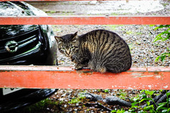 Today's Cat@2016-04-29 (masatsu) Tags: cat pentax catspotting mx1 thebiggestgroupwithonlycats