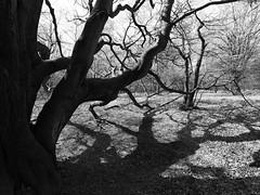 Germany - Reinhardswald (Michael.Kemper) Tags: trees shadow white black tree forest canon germany deutschland eos is shadows hessen usm wald bume schatten baum ef schwarz hesse 6d reinhardswald 1635 weis f4l canoneos6d canonef1635f4lisusm