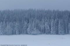 (planetphoto.fr.ht) Tags: winter white snow green ice nature monochrome switzerland suisse natural hiver natur natura vert bosque neige extrieur arbre blanc gel froid neuchtel fort sapin glace neiges bosques snows aventure hauteur pananorama greatnature epine arbes switzera chauxdefond