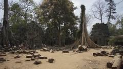 DSC03504 (picturesfrommars) Tags: cambodia kambodscha siem pro f2 12mm angkor ta walimex prohm reao samyang rokinon a6000