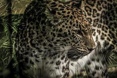 Naturaleza salvaje (seguicollar) Tags: selva salvaje zoomadrid trige photomanipulación naturalezasalvaje imagencreativa virginiaseguí