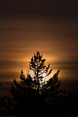 Sunset behind spruce (Jan Zoric) Tags: sunset tree silhouette forest spring cloudy slovenia spruce