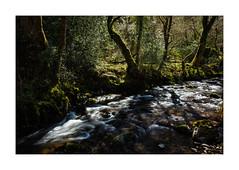(Light Magnetic) Tags: uk woodland landscape stream somerset horner exmoor