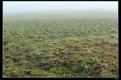 DP1U6636 (c0466art) Tags: light beautiful grass fog creek canon landscape scenery atmosphere mysterious land 1dx c0466art