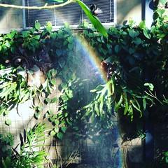 IMG_4700 (cosmikcreepers) Tags: nature garden rainbow rainbows