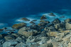 Long time exposure of the sea (kurt.kristiansen) Tags: sommer lofoten longtimeexposure ferietur singhrayvarind haukelandutakleiv