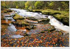 The Strid on the River Wharfe in Full Flow After Heavy Rain Yorkshire Dales National Park England (© Mark Sunderland www.marksunderland.com) Tags: wood uk greatbritain travel autumn tree fall nature woodland river landscape nationalpark dangerous europe unitedkingdom yorkshire fast rapids foliage gb flowing beech wharfedale fallenleaves yorkshiredales strid boltonpriory wharfe northernengland