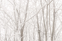 Hazy trees (Daniel Kulinski) Tags: trees winter white snow cold tree monochrome fog landscape photography high europe frost image outdoor daniel low country creative picture meadow samsung poland flake 20mm hazy flakes far photograhy pl nx pruszków mazowieckie pruszkow samsungcamera nx1 kulinski parzniew samsungnx nx20mm danielkulinski imagelogger samsungnx20mmf28 nx20mmf28 samsungnx20mm samsungnx1