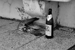 alcohol kills (Stefano E) Tags: street blackandwhite beer strada pigeon alcohol birra piccione cagliari biancoenero bastione alcol