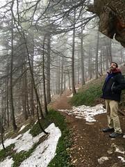 In the Cedar Forest of Maasser al-Shouf, Lebanon (quaerentia) Tags: winter lebanon forest cedars