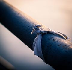 38/366 (phillipgaede) Tags: city blue sunset cold water 50mm wasser sonnenuntergang hauptstadt knot potd bluehour 365 reminder stange erinnerung blauestunde knoten 366 projekt366 eos600d