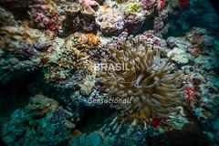 NE_Abrolhos0020 (Visit Brasil) Tags: horizontal brasil fauna natureza bahia nordeste detalhe externa abrolhos semgente subaqutica diurna