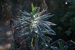 drops (pedrilla) Tags: flora natura pianta ortobotanico montemarcello