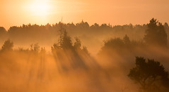 Denmark. (richard.mcmanus.) Tags: trees panorama mist landscape denmark dawn explore zealand gettyimages mcmanus