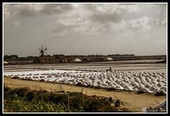 IMG_1763 (rinosaltini1) Tags: saline sicilia trapani marsala dello mozia riserva stagnone