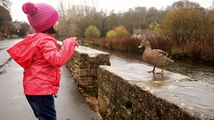 Quacking Nadiah (SallehS) Tags: uk england village cotswolds bibury lateautumn