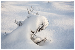 20160116. Orkjrve. 6078 (Tiina Gill (busy)) Tags: winter snow tree nature outside bush estonia reserve orkjrve