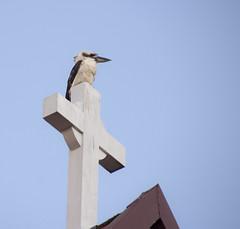 Kookaburra (Igor Serikba) Tags: bird rooftop canon eos cross tamron kookaburra 18270