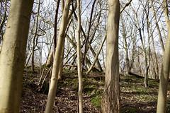Titsey Place (Jason Webber) Tags: park tree london place greater beech titsey