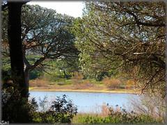 Laguna del Portil-Huelva (Spain) (sky_hlv) Tags: españa lake lago andalucía spain europa europe huelva laguna atlanticocean pinares costadelaluz puntaumbría cartaya elportil oceanoatlántico reservanatural lagunadelportil
