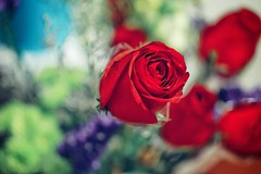 Valentine's #rose #red #helios #hongkong #photo #blogger #flower #flowers #nice #nicepic (mc9803) Tags: flowers red flower rose hongkong photo nice blogger helios nicepic