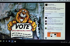 Vote CatRescue.org/contest (not a box brownie) Tags: rescue usa cats animal cat kitten feline wildlife tiger lion kittens competition leopard jungle tigers lions pumas felines cheetah panthers savannah jaguar liger puma bobcat bengals wildcat vote panther cougar bengal lynx ocelot serval caracal cheeta cougars jaguars savannahs bobcats wildcats leopards ligers servals tigrina ocelots margay jaguarundi chausie caracals pixiebobs guigna chinesemountaincat chausies safaricats margays tigrinas