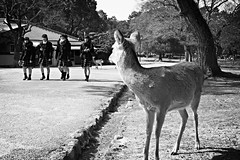 Deer watching girls (__Thomas Tassy__) Tags: world camera trip travel girls bw white black color art beautiful beauty animal japan canon wow wonderful fun photography eos 350d idea photo amazing cool nice fantastic perfect asia photographer shot superb artistic gorgeous awesome great creative picture atmosphere pic tassy best deer abroad stunning imagine moment nara capture inspire beau magnifique prise joli meilleur genial grandiose splendide