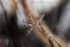 IMG_9218 (nitinpatel2) Tags: snowflakes patel nitin